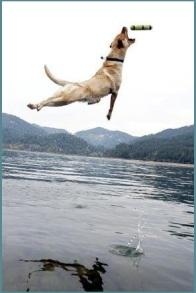Fetch and Retrieve